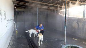 Çöl sıcaklarına karşı sokak hayvanları buharla serinletiliyor