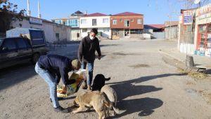 Erzincan Belediyesi Sokak Hayvanlarını Unutmadı